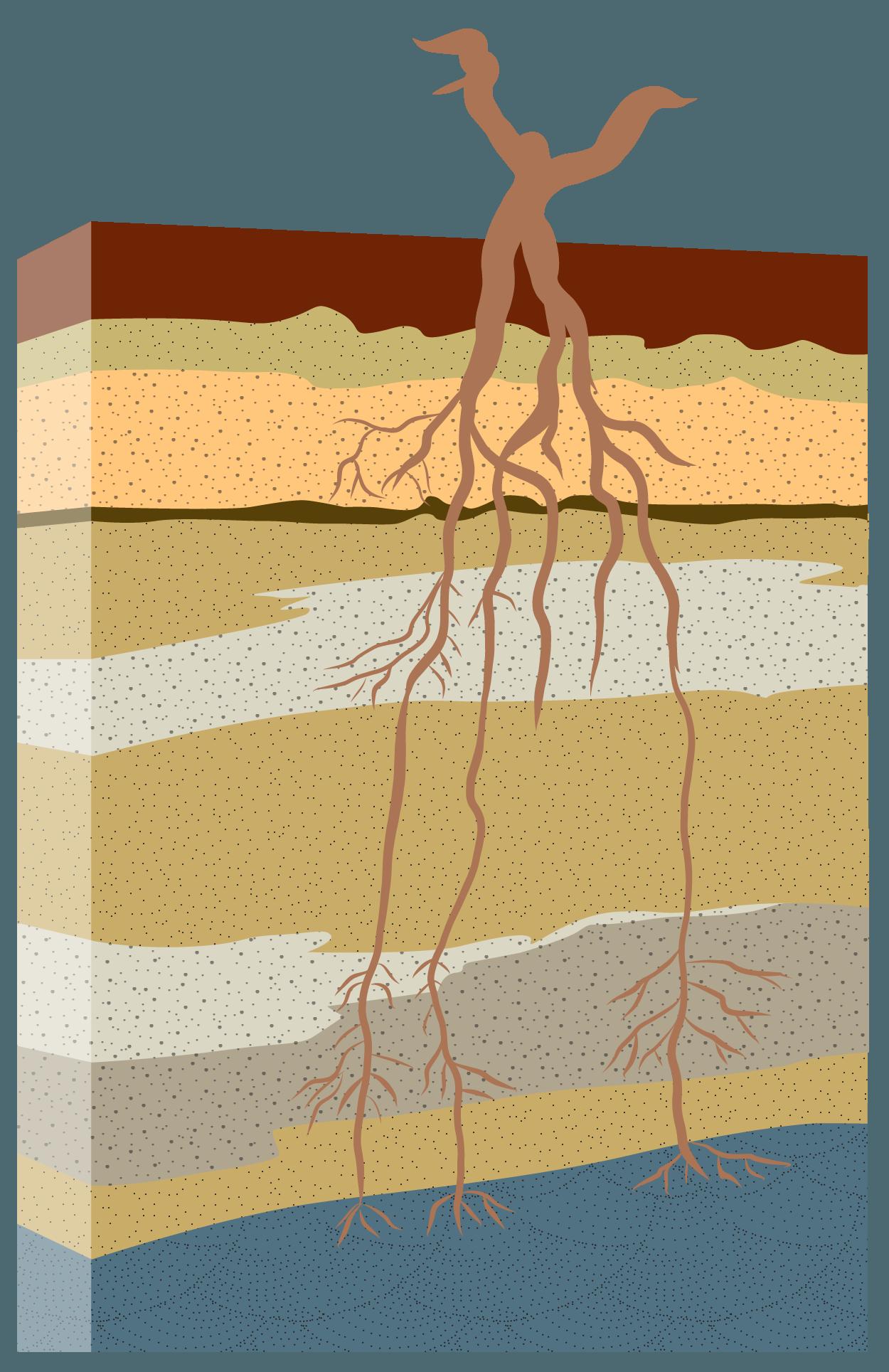VP-Soil-Clean-1