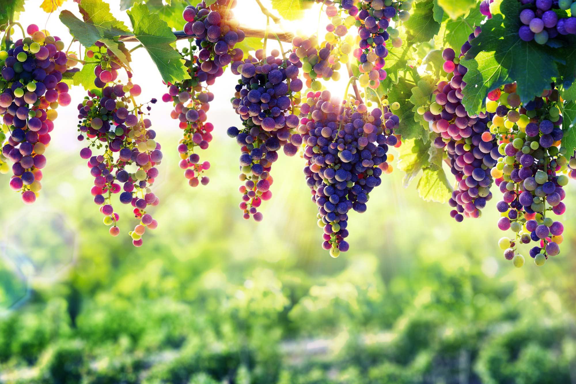 Winery Website Design Web